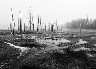 Wyoming, Yellowstone, Yellowstone National Park, Foggy Morning,