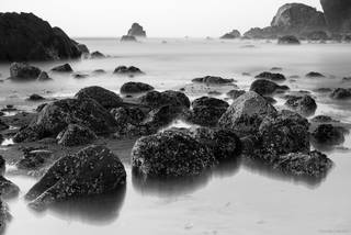 California, Pacific coast, Redwood National Park, monochrome